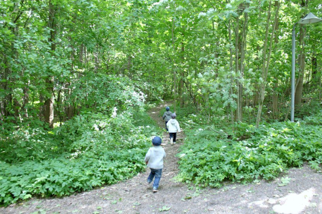 Tarvaspään metsäpoluilla