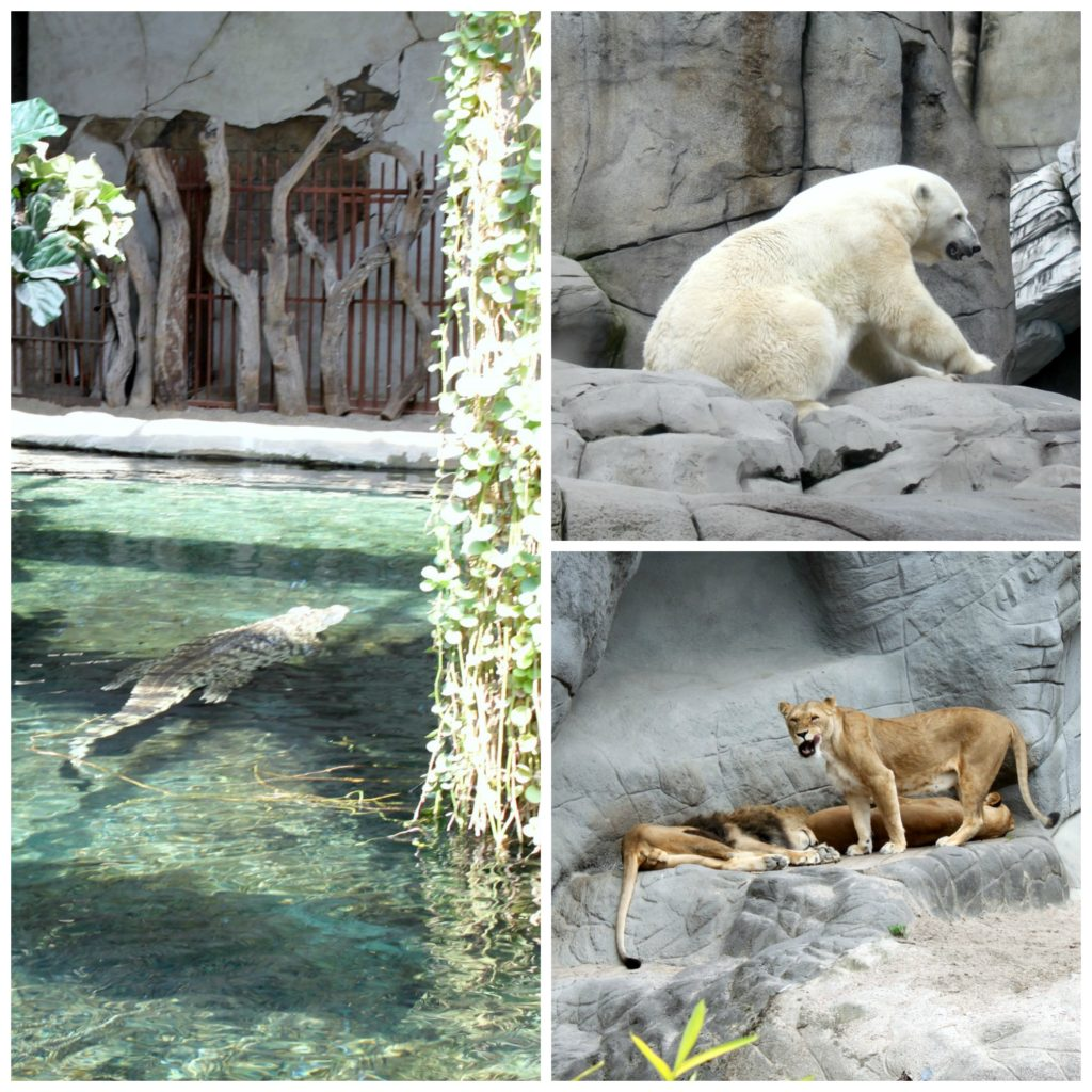 Hagenbeckin eläintarhassa