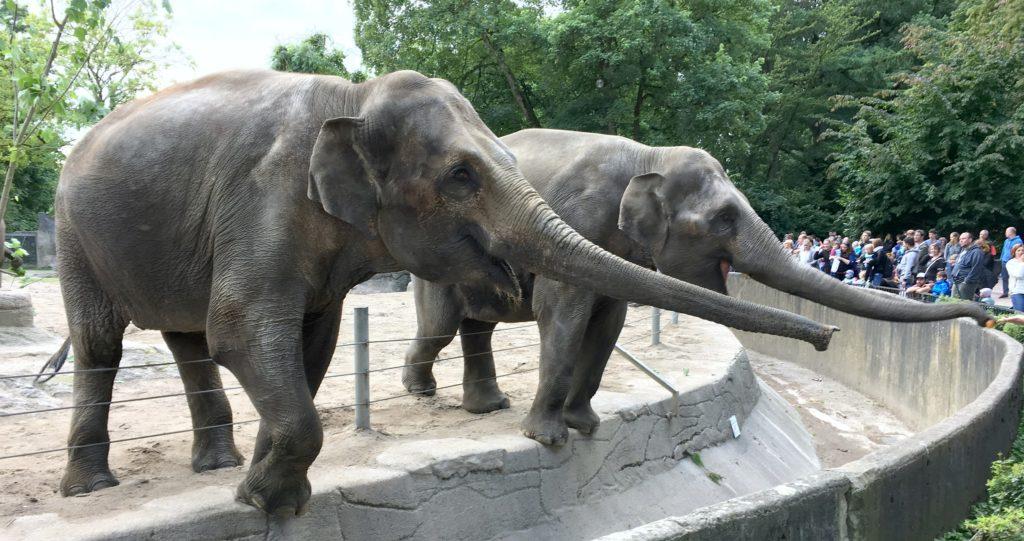 Norsuja Hagenbeckin eläintarhassa Hampurissa