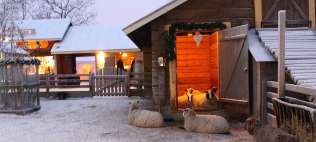 Koiramäki ja lampaat