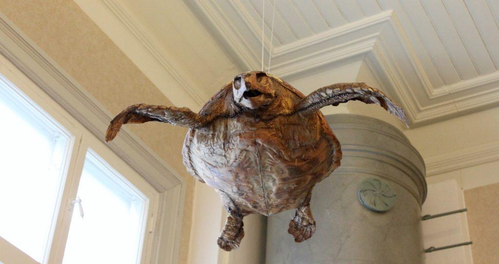 Rauman merimuseo / kilpikonna
