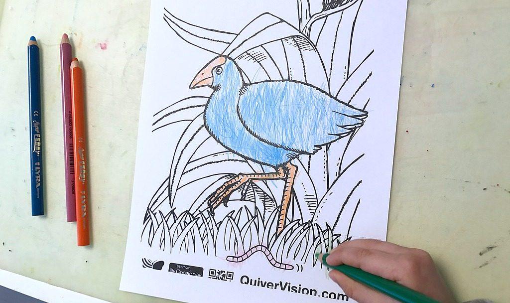 Quiver Vision / Värityskuvat