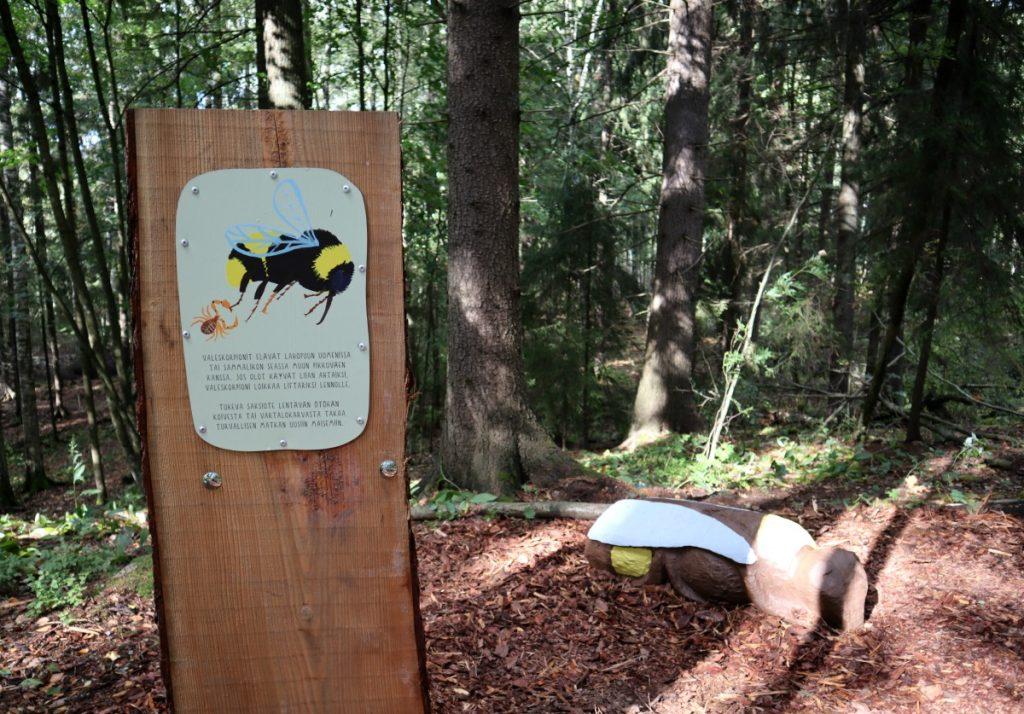 Löytöretki metsään / Matti Pikkujämsä