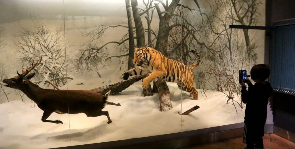 LUOMUS - Luonnontieteellinen museo, Helsinki (Eläinmuseo)