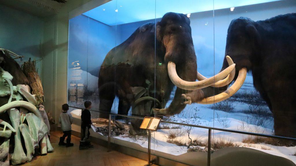 LUOMUS - Luonnontieteellinen museo, Helsinki